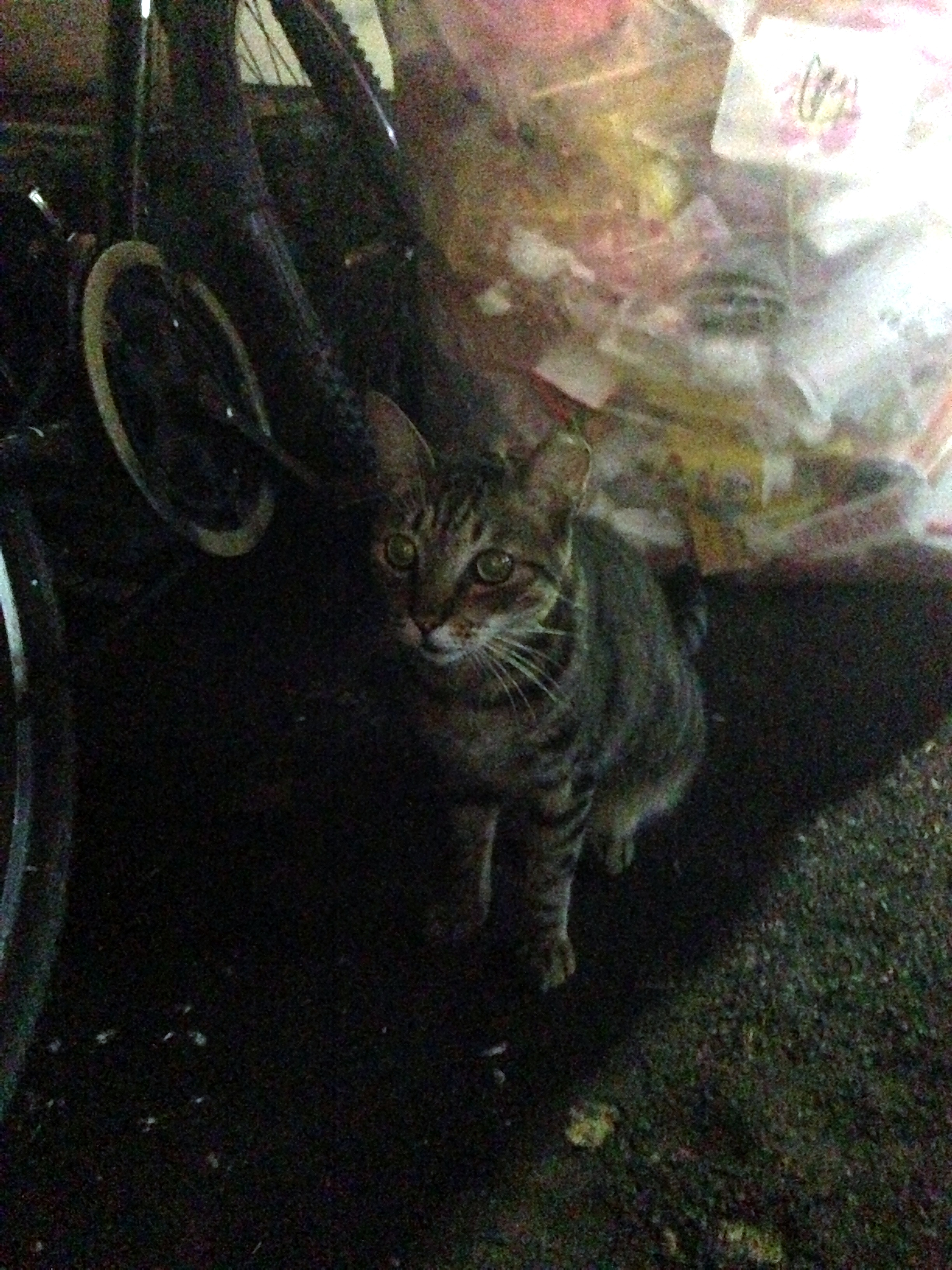 Take out the trash cat